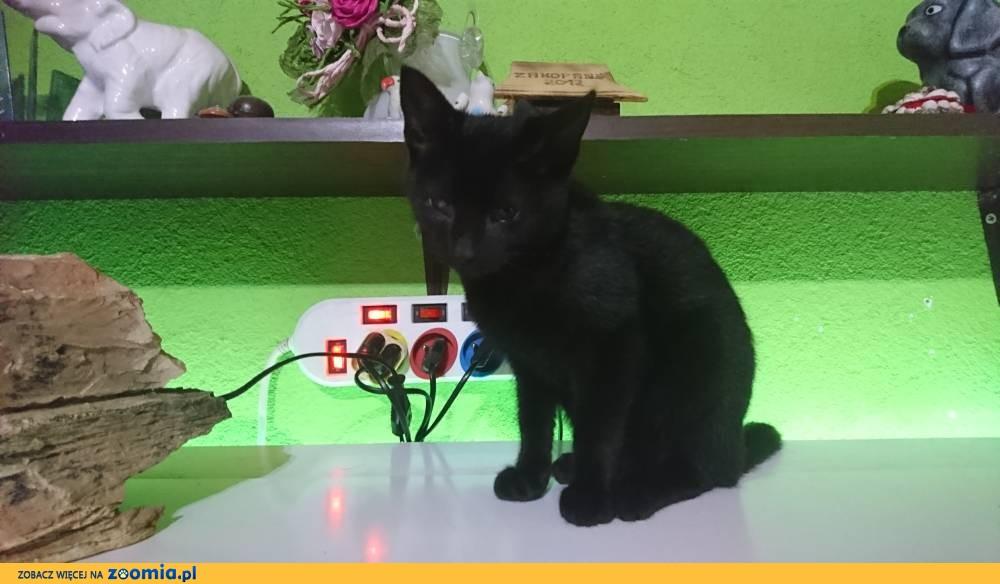 Koteczka Mufa szuka domu
