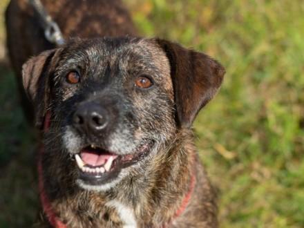 Brutus_ terrier mix  grzeczny  niekonfliktowy psiak do adopcji!