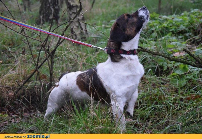 Niewielki Rambo, młody psiak szuka domu!