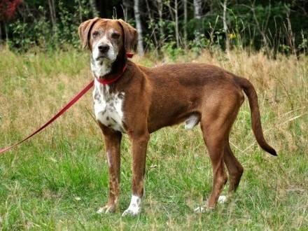 Wyżełkowaty Bruno - pies idealny! :)