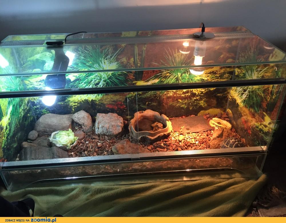 Sprzedam żółwia greckiego wraz z terrarium