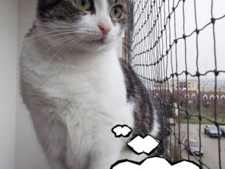 Towarzyska młoda kotka Słoninka   dolnośląskie Wrocław