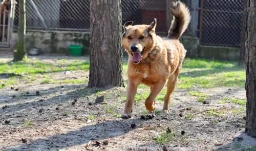Kaszmir  cudowny psiak szuka domu!   Kundelki cała Polska