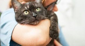 Dymna  piękna Ania Czy ktoś pokocha starszą kotkę?   śląskie Katowice
