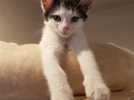 Tokyo z Fundacji Miasto Kotów   łódzkie Piotrków Trybunalski