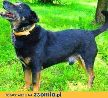 KABANOS - pies wyjątkowy, kocha ludzi, dzieci do adopcji,