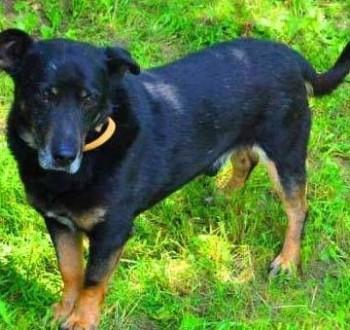 KABANOS - pies wyjątkowy  kocha ludzi  dzieci do adopcji