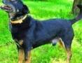 'KABANOS - pies wyjątkowy, kocha ludzi, dzieci do adopcji,