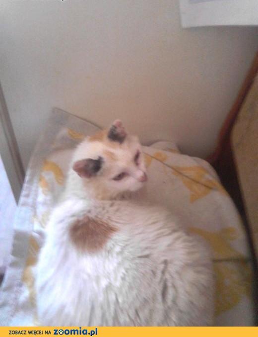 Tylko na zewnątrz Ogłoszenia: oddam kota, oddam kocięta – Koty i kociaki szukają BH29