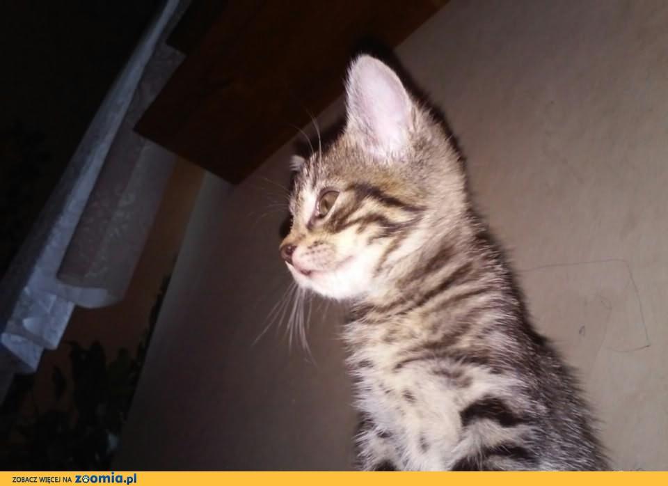 Przygarnij kotka :)