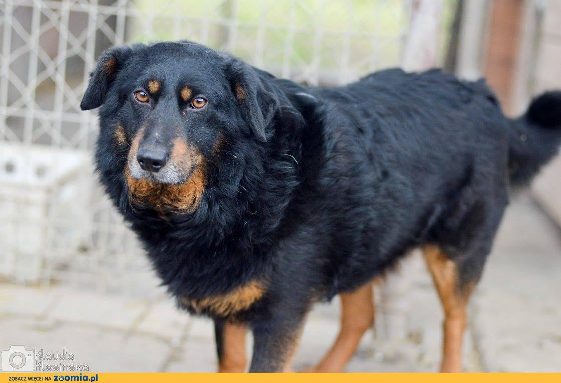 Dżeki, niekonfliktowy, przyjazny psiak szuka kochającego domu!