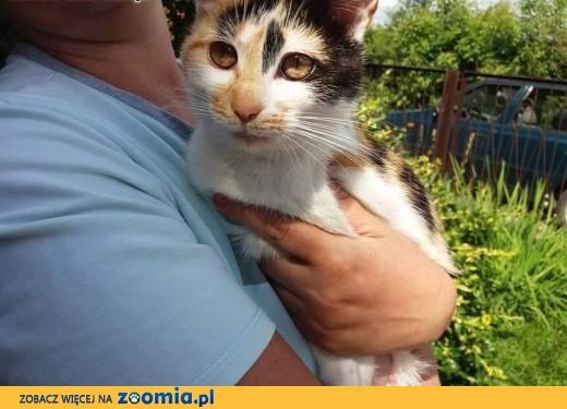 DT i DS dla uroczej kotki pilnie poszukiwany!,  mazowieckie Warszawa
