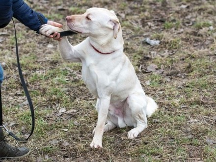 Biszkopt - wspaniały pies z charakterem