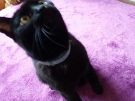 Delikatna  spokojna czarna kotka szuka fajnych ludzi   dolnośląskie Wrocław