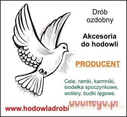 Drób ozdobny - Ptaki ozdobne