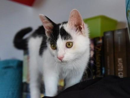 Eliot - marzycielski Kotek szuka domu