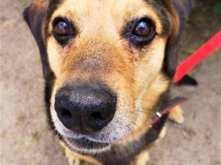 SAMI - kochany  spokojny psiak szuka dobrego domu   mazowieckie Warszawa