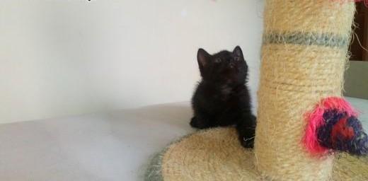 Mały kociak Irys szuka domu   łódzkie Łódź