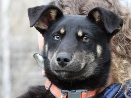 Półroczny psiak Denis szuka domu