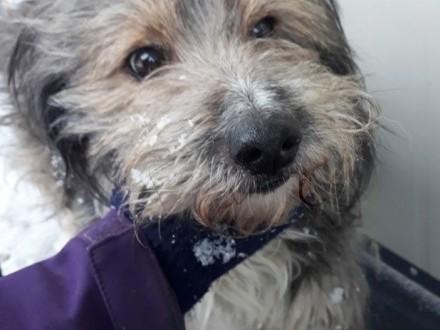 PERSIK-śliczny  nieduży  kudłaty starszy psiak szuka domu  adopcja