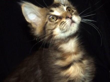 koteczka trzymiesięczna