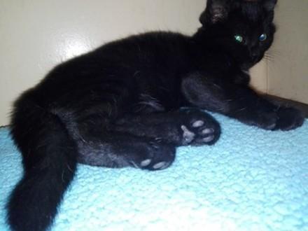 Młodziutka Maja  cudna koteczka jak węgielek  do pokochania!