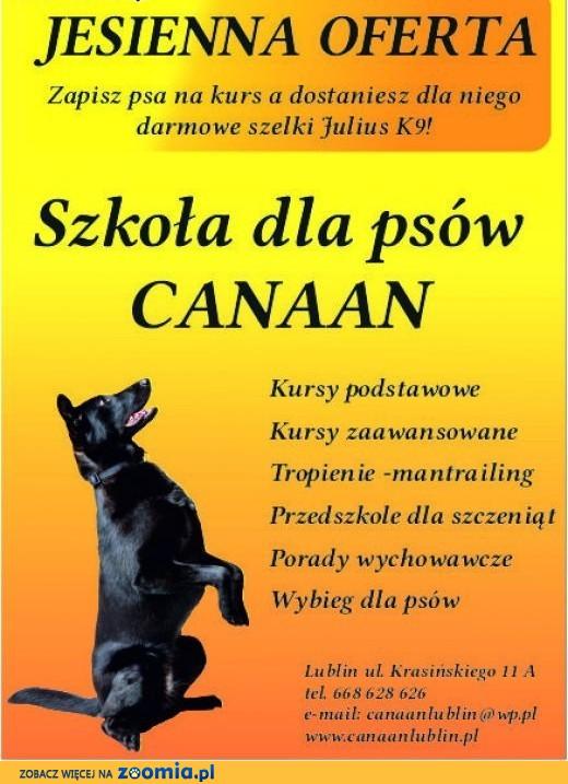292e6337a15b32 Promocyjne kursy posłuszeństwa dla psów, lubelskie Lublin « Psy ...