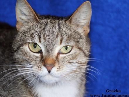 Grażka - śliczna koteczka