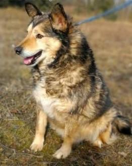 MOLIER - kochany  zagubiony psiak  od kilka lat marnuje się za kratami   mazowieckie Warszawa