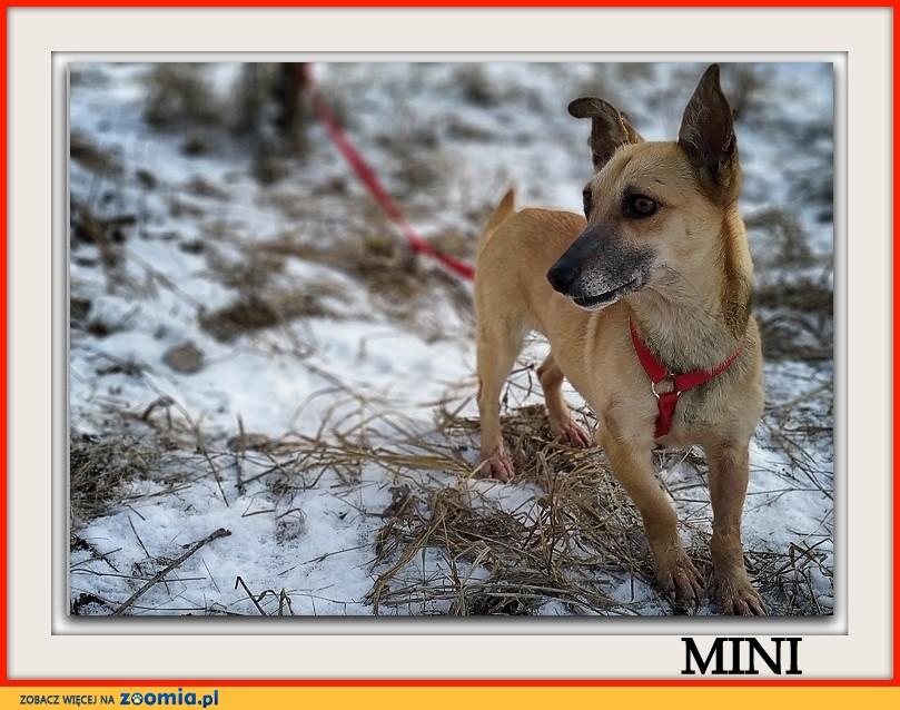 Mała 6 kg,uratowana,aktywna,wesoła,sterylizoawana suczka MINI_Adopcja_