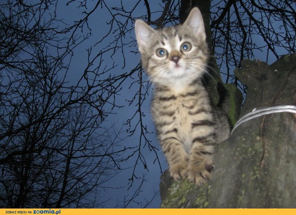 Prześliczne kociaki