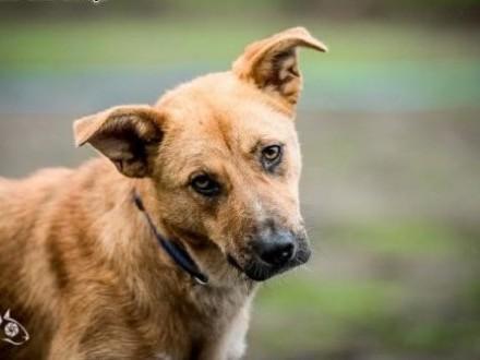 LORI - przyjacielska  odlotowa  psa cudna  że boli głowa!   dolnośląskie Wrocław