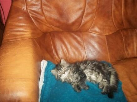 kotka pers   warmińsko-mazurskie Giżycko
