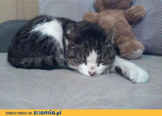 Znaleziono kotkę Reda,  pomorskie Rumia