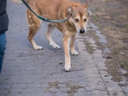 Daj szansę starszemu psu! Cudny  kochany Jasio czeka już 8 lat   warmińsko-mazurskie Olsztyn