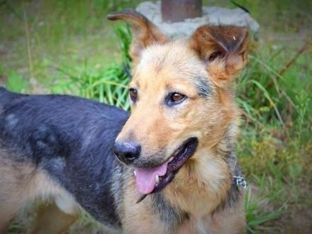 Akar - wyjątkowy pies :)