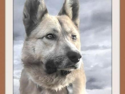 FIGARO ofiara okrucieństwa średni łagodny wrażliwy pies   dolnośląskie Wrocław