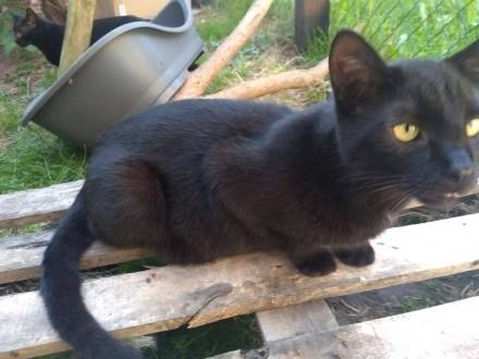 GROSZEK - kot na szóstkę z plusem szuka domu!