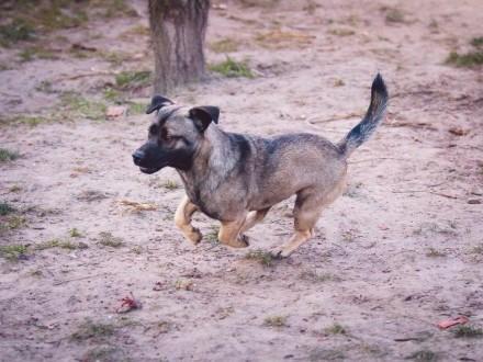 Tolek, pozytywny psiak, domowy i wychowany ADOPCJA