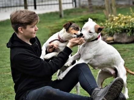 ŁATEK młody psiak kochający ludzi i świat szuka dobrego domku na zawsze ,  Kundelki cała Polska