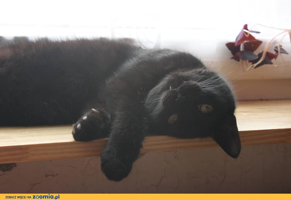 Zaginęły koty z Ksawerowa
