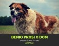 Benio-potrzebuje doświadczonego, odpowiedzialnego opiekuna