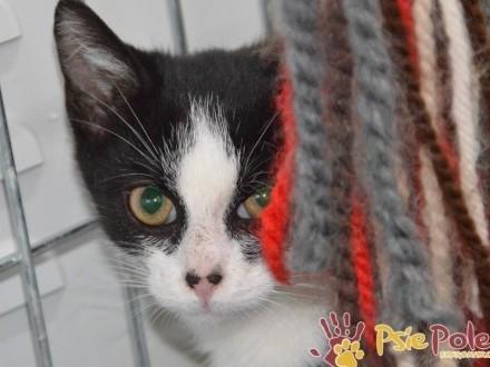 ŁOBUZIAK-piękny  uroczy kociak i jego rodzeństwo-szukamy DOMU