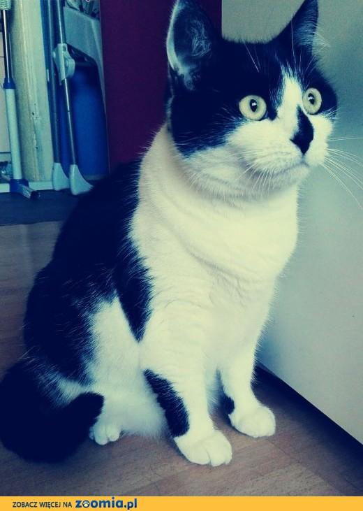 Oddam kotkę w dobre ręce,  łódzkie Pabianice