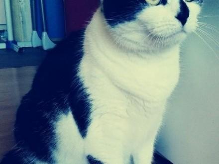 Oddam kotkę w dobre ręce   łódzkie Pabianice