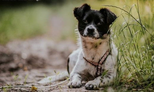 Maisy: 2-letnia spokojna sunia do pilnej adopcji    małopolskie Kraków