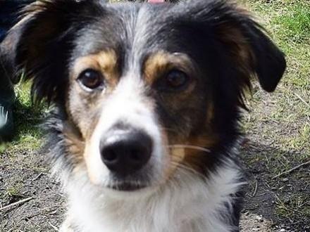 Kajtek-młody psiak do adopcji   śląskie Sosnowiec