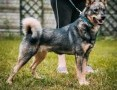 'ARO - piękny psiak, porzucony na działkach szuka domu!,  małopolskie Kraków