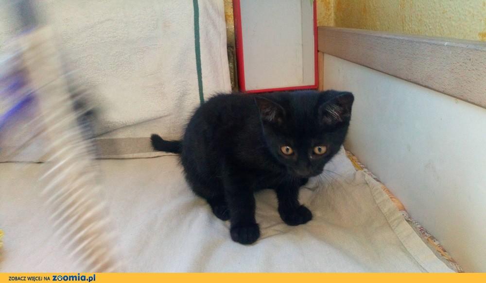 Mała kotka Hela szuka domu