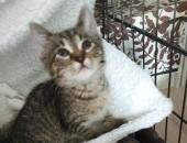 Mała kotka Fryga szuka domu
